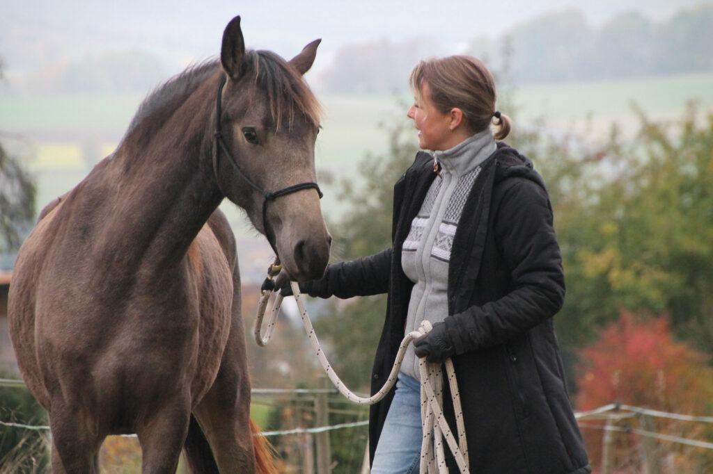 Vertrauen Pferd Mensch